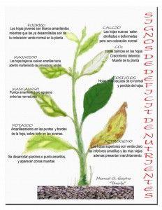 Cultivo del Tomate: signos de falta de nutrientes