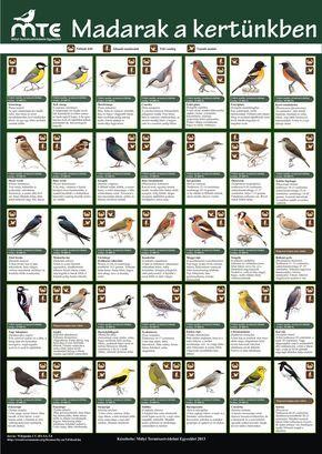 madarak a kertünkben