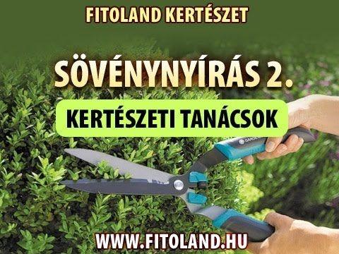 Sövénnyírás 2. - Sövények tápozása, cserjék