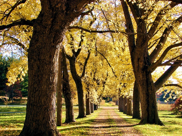 There is something magical about tree-lined driveways:)