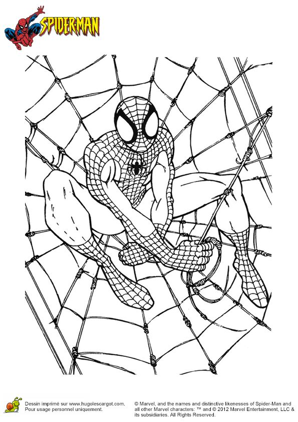 coloriage de spiderman entrain de construire une toile pour piger les mchants