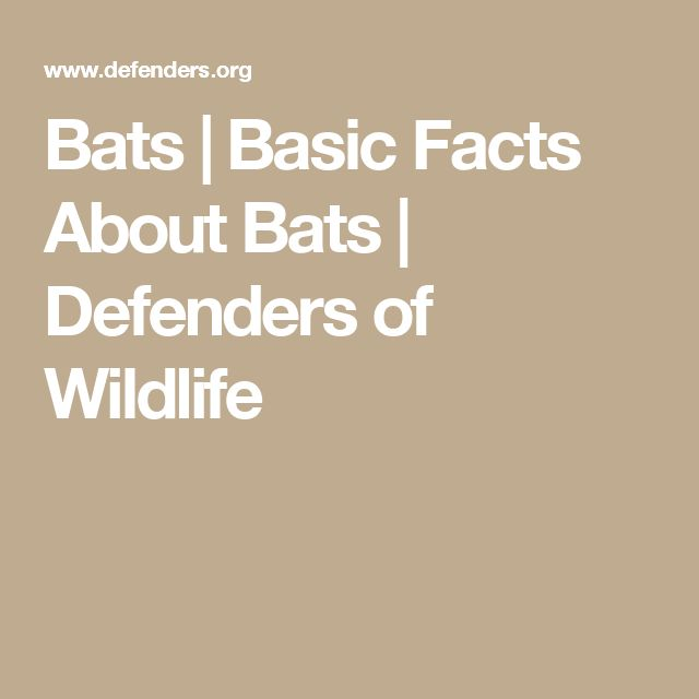 Bats | Basic Facts About Bats | Defenders of Wildlife