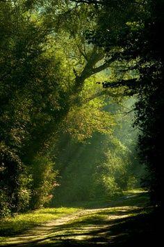Sendero en el bosque- Argentina-
