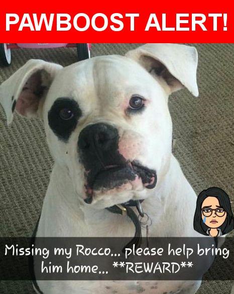 Please spread the word! Rocco was last seen in Littlerock, CA 93543.    Nearest Address: Near E Ave S-8 & 87th St E