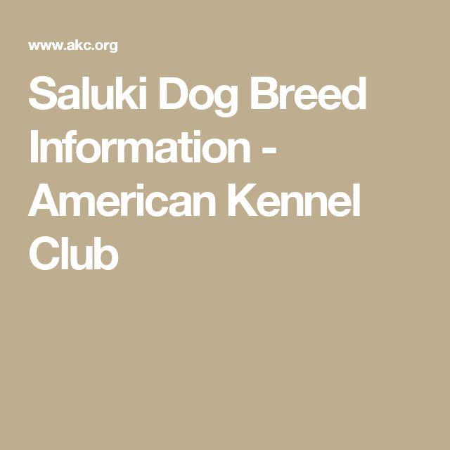 Saluki Dog Breed Information - American Kennel Club