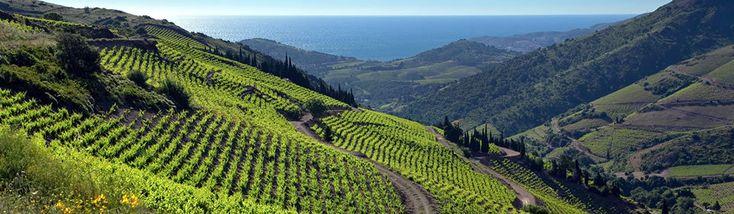 Vins de Banyuls - Lavinia