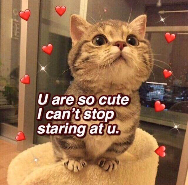 Pin By Double Egg On Llamalo X Cute Memes Cute Love Memes Cute Cat Memes