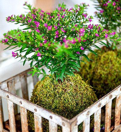 Kokedama | Créez votre Kokedama, un art végétal étonnant – DIY | Ça se ...