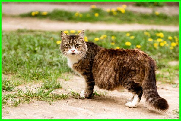 10 Nama Kucing Islami Yang Bagus Beserta Artinya Daftarhewan Com Di 2020 Kucing Hewan Kucing Betina