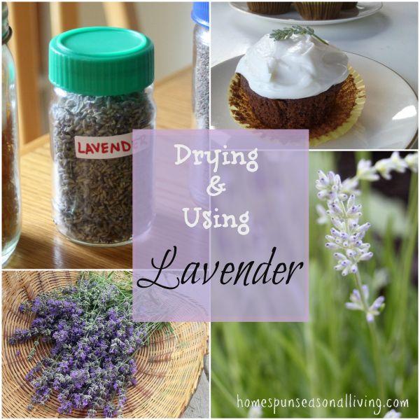 Drying & Using Lavender - Homespun Seasonal Living