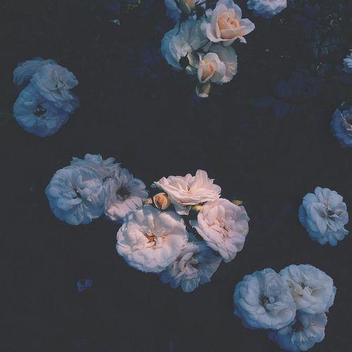 blueflowerrrtumblrcom  flor azul