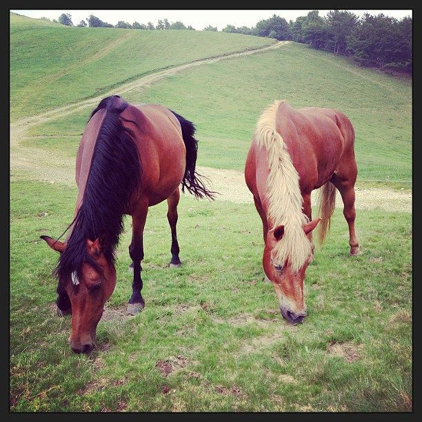 A cavallo nella #natura. #OasiZegna #Italy #horseriding www.oasizegna.com