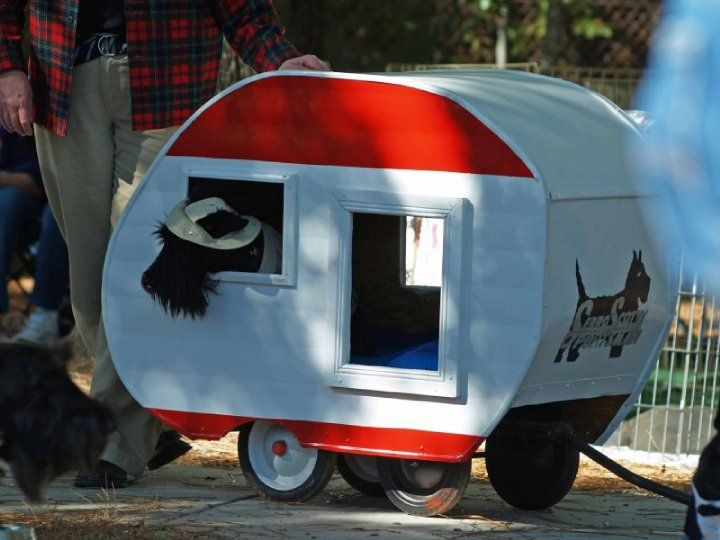? Seriously ?.... this is a scream- maybe we could make one so our Scotties could travel in style too.