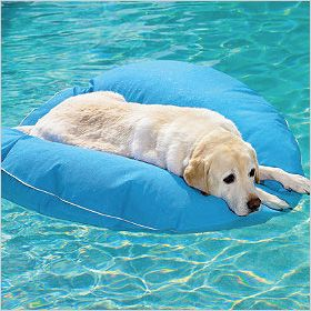 Top 10 water toys for pups.For more visit http://www.dogspot.in/