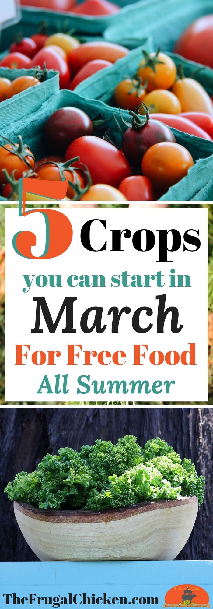Gardening to save money or for healthier, organic food? Here's 5 delish veggies you can start now for free, healthy organic food all summer!
