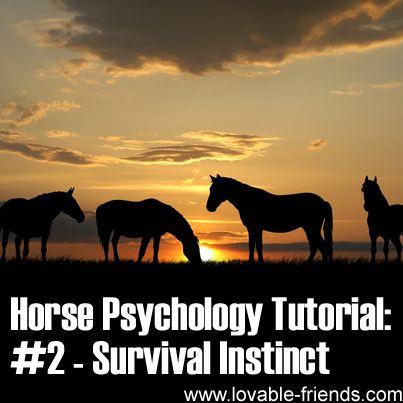 Horse Psychology Tutorial - Part 2 Survival Instinct   ►►http://www.lovable-friends.com/horse-psychology-tutorial-part-2-survival-instinct/?i=p