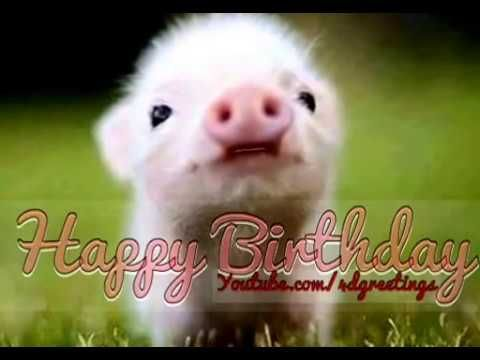 Cute Little Pig Singing Happy Birthday Song - YouTube