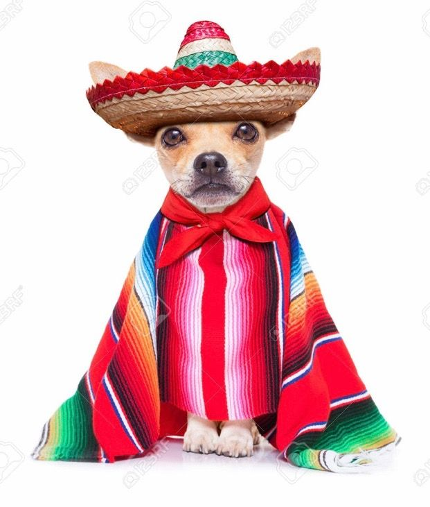 Dog Wearing A Mexican Hat Pictures