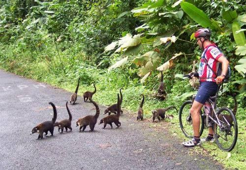 Costa Rica traffic jam!