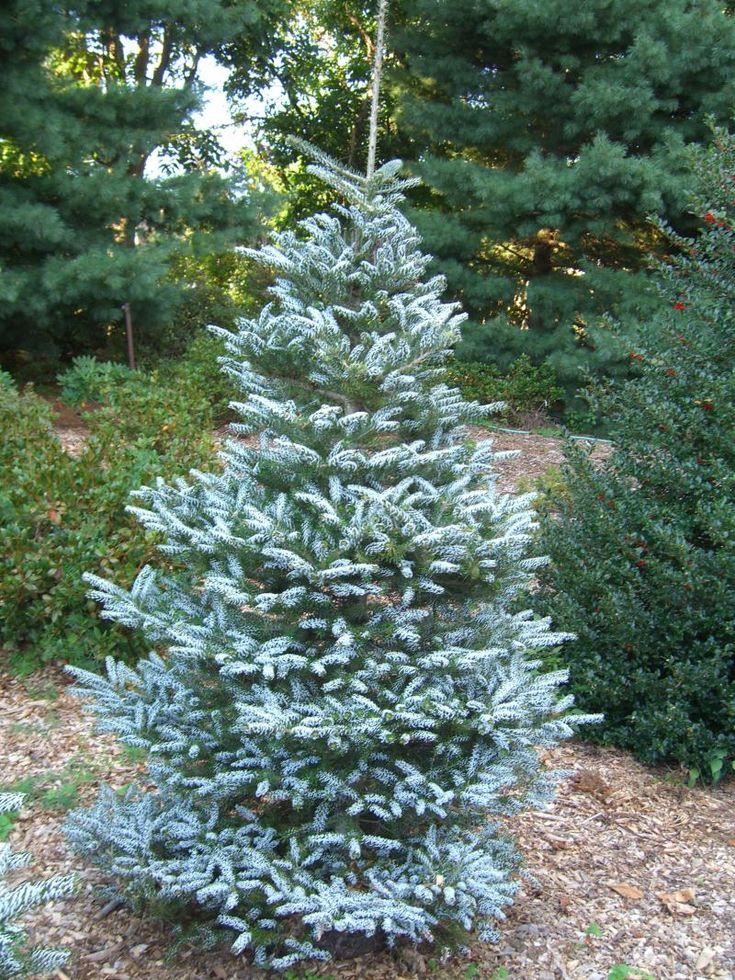 Dwarf Landscaping Trees Ideas