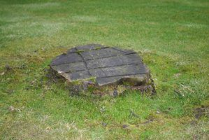 Removing tree stumps will make a yard safer.