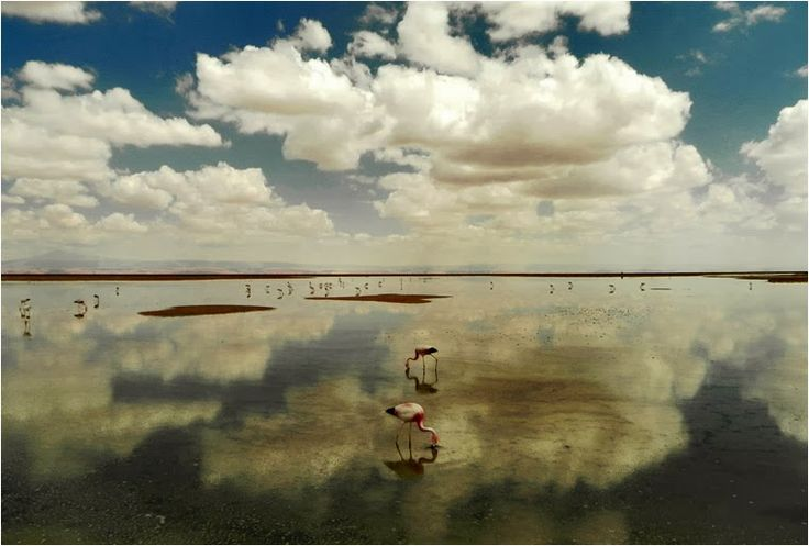Best Photo of the Day in #Emphoka by Felipe Bustamante [Nikon Coolpix P100] - http://flic.kr/p/edZprw