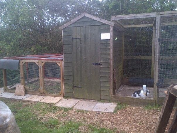 6x4 rabbit shed with runs on either side
