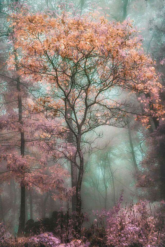 Nature Beauty Is Good For Heat And Soul