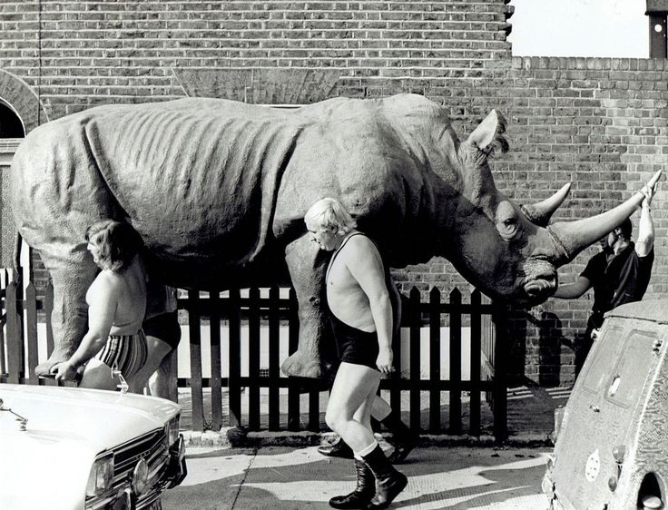 1972 Original Photo shirtless pro wrestlers move stuffed rhino animal in London