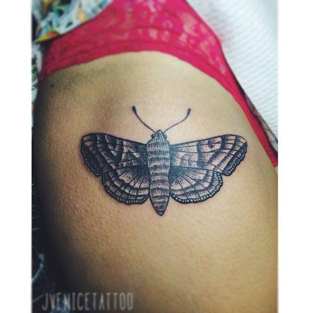 Angle Moth