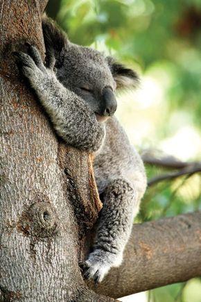 40 Herzschmelzende Niedlichkeit Überladene Tierbilder
