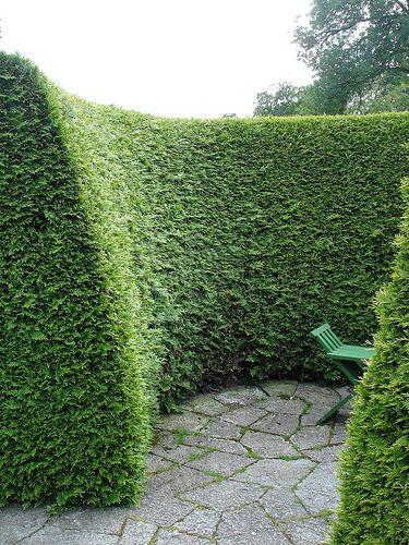 Cupressocyparis leylandii (conifereer), flinke groeier waardoor je met een minimum aan onderhoud, en vrij goedkoop, al snel over een groene muur beschikt