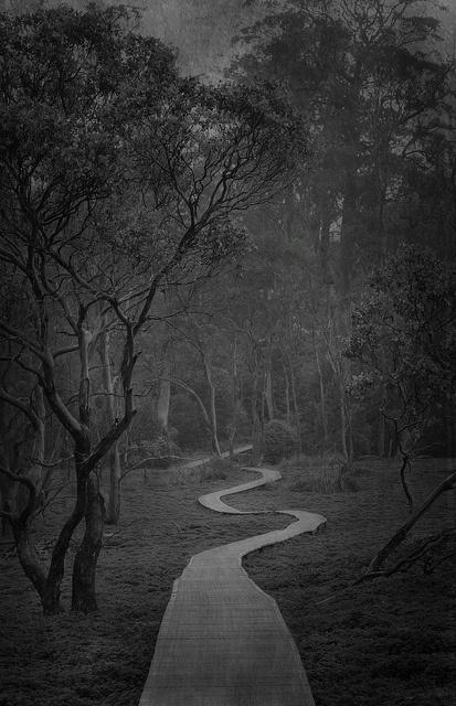 miles and miles of boardwalk across moist bush undergrowth, cradle mountain, tasmania, australia