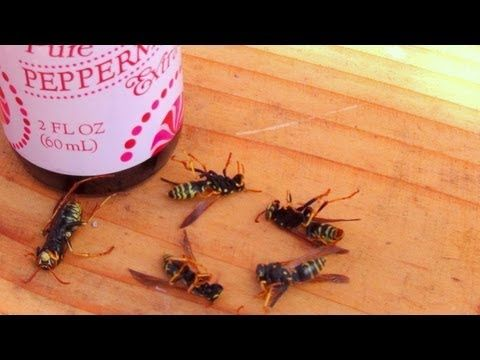 How To Make A Natural Wasp Control Spray