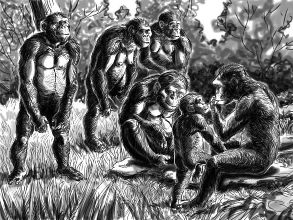 comparison of 3 australopithecines Lucy's 3 million-year-old bones were found in 1974, but they're still yielding   lucy belonged to the extinct species australopithecus afarensis,.