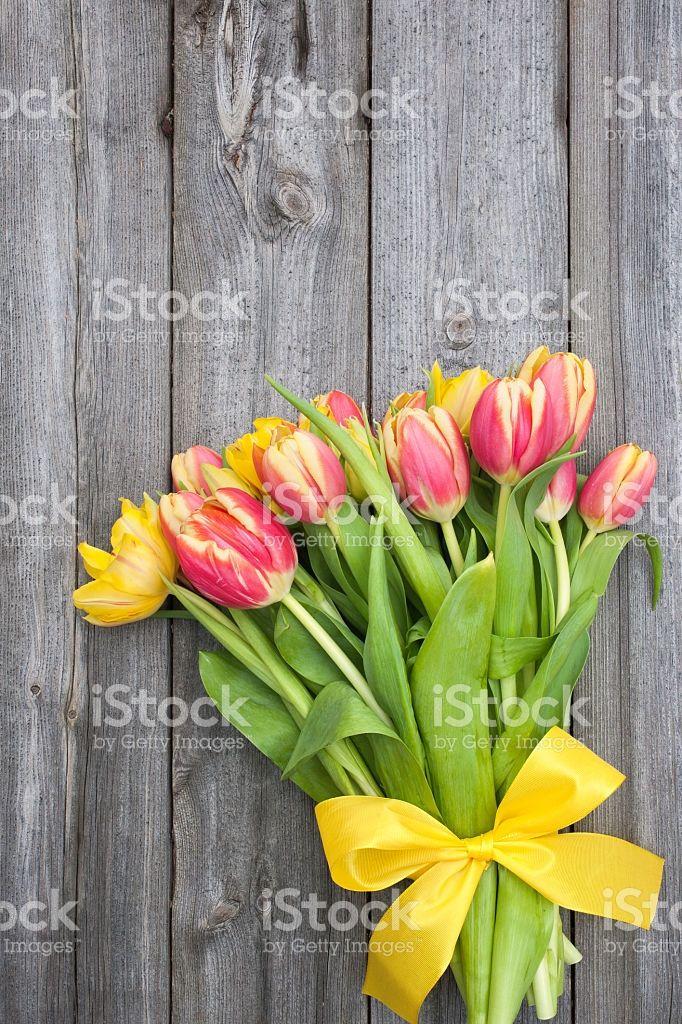 fresh tulips on wooden background royalty-free stock photo