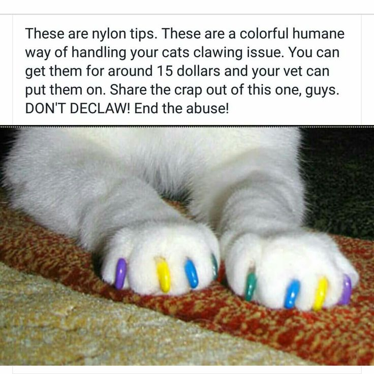 Cats need their claws, don't declaw