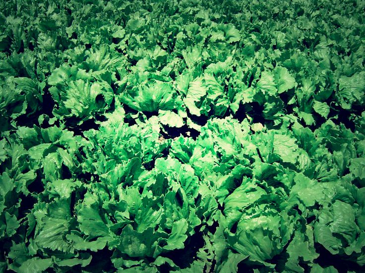 5 Easy to Grow Greens