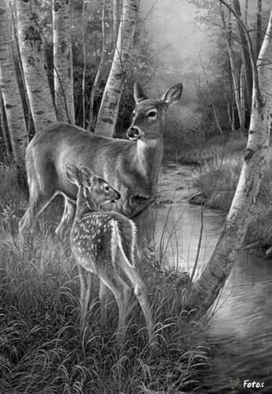 23 Besten Wildmotive Wild Animals Bilder Auf Pinterest