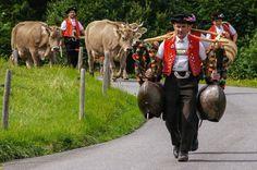 Alpabfahrt, Photo by Hans Zürcher, Teufen, Switzerland