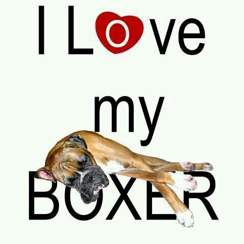 Mijn boxer