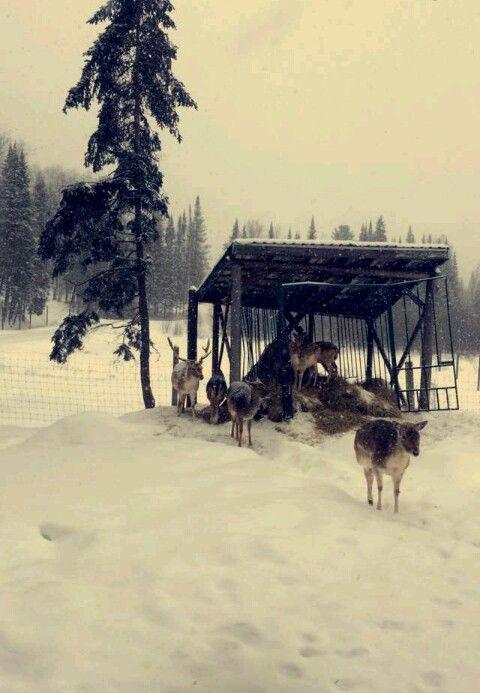 Dans la neige...❄