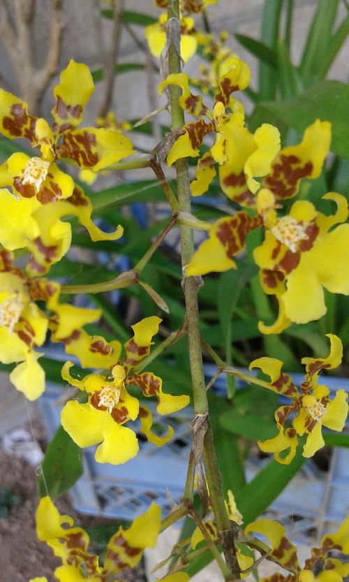 Imagem de flowers, bloom, and yellow