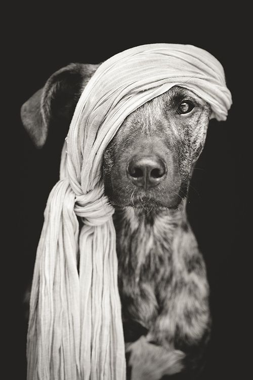 """Pirate of the Baltic Sea"" by Elke VOGELSANG - #BwLovedByPascalRiben"