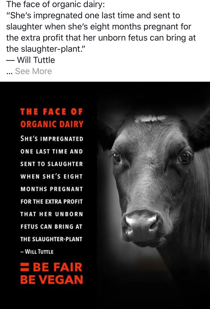 Animal Rights Quotes 1354 Best Animal Rights Images On Pinterest  Vegan Life Vegan