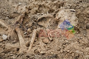 stock photo of excavations of burial of soldiers of the second world war kakhovka ukraine 06 24 2017