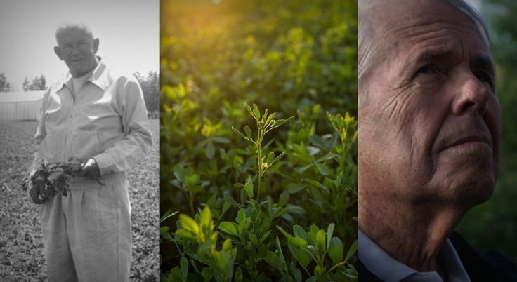 Discovering Nutrilite: Past, Present and Future
