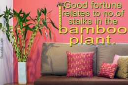 Indoor Bamboo Plant Meaning and Care