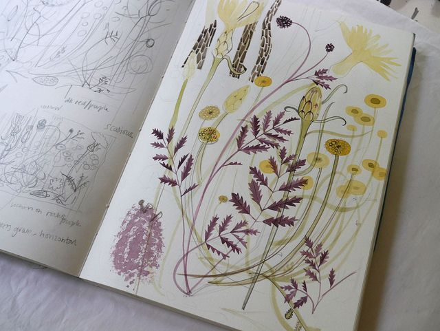 Angie Lewin, sketchbook, nature, drawing, watercolour, painting, illustration, plants, flowers