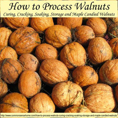 Maple Candied Walnuts | Recipe | Candied walnuts
